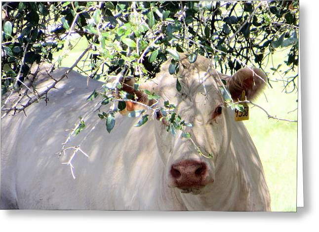 Can You See Me Now? Greeting Card by Dorothy Menera