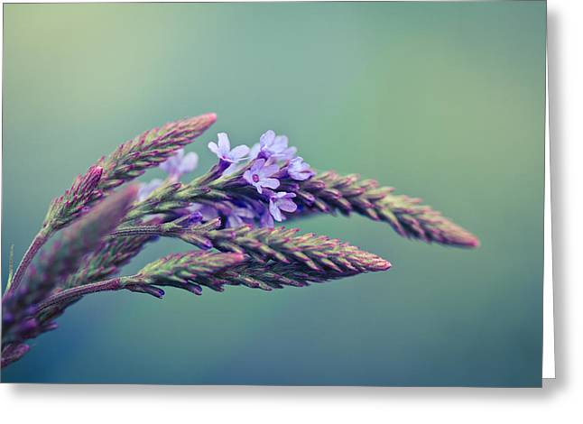 Grass Greeting Cards - Canaan Grass Greeting Card by Shane Holsclaw