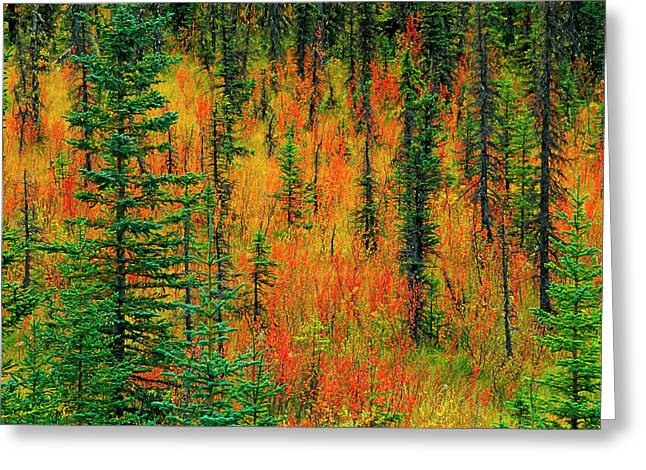 Canada, Alberta Autumn In A Meadow Greeting Card by Jaynes Gallery