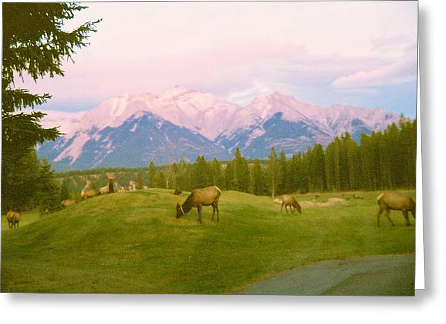 Grazing Snow Greeting Cards - Canada Caribou Greeting Card by Richard Jenkins