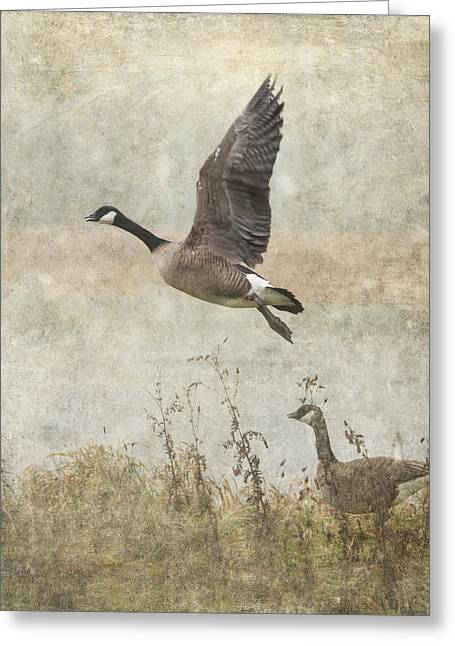 Wildlife Refuge. Greeting Cards - Canada Geese 2 Greeting Card by Angie Vogel