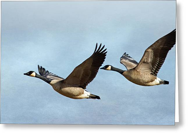 Wildlife Refuge. Greeting Cards - Canada Geese Greeting Card by Angie Vogel