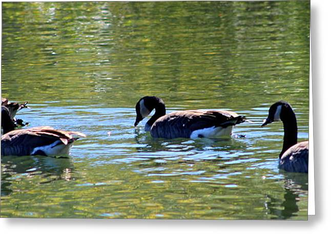 Water Fowl Greeting Cards - Canada Geese Greeting Card by Earl  Eells a