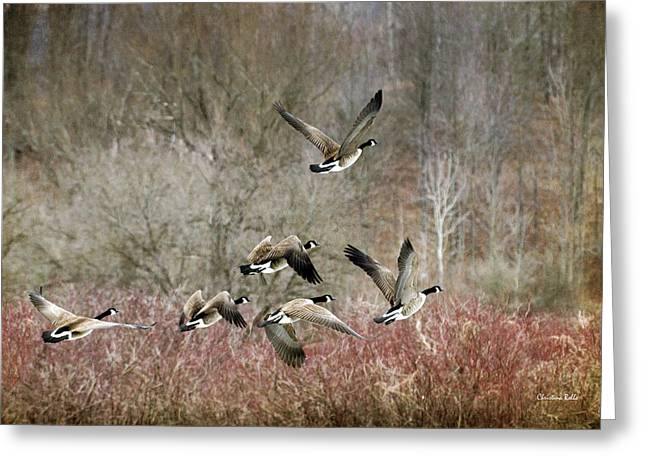 Hunting Bird Greeting Cards - Canada Geese In Flight Greeting Card by Christina Rollo