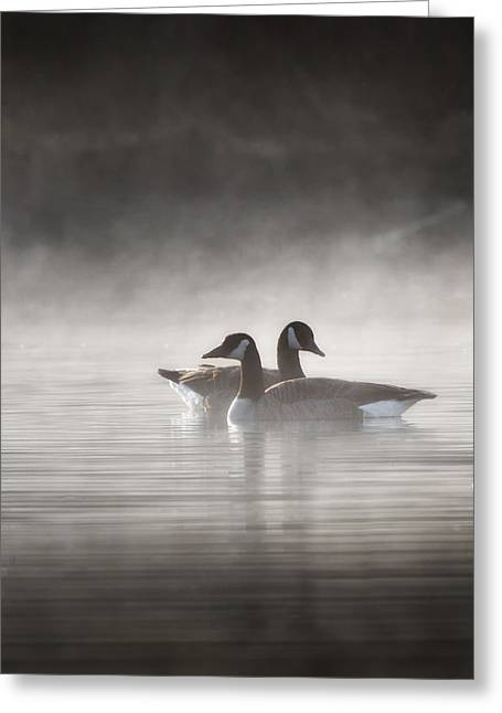 Geese Photographs Greeting Cards - Canada Geese In The Fog Greeting Card by Bill  Wakeley