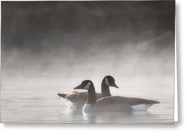 Minimalist Greeting Cards - Canada Geese In The Fog Square Greeting Card by Bill  Wakeley