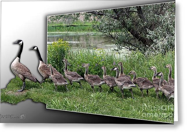 Mother Goose Mixed Media Greeting Cards - Canada Geese Greeting Card by J McCombie