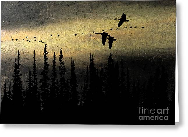 Fir Trees Pastels Greeting Cards - Canada Geese Seeking the Light Greeting Card by R Kyllo