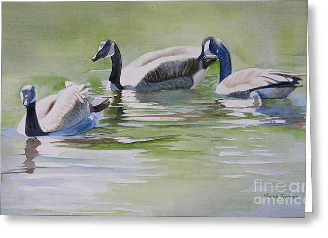Wild Goose Greeting Cards - Canada Geese Greeting Card by Sharon Freeman