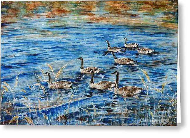 Wa Paintings Greeting Cards - Canada Geese Greeting Card by Zaira Dzhaubaeva
