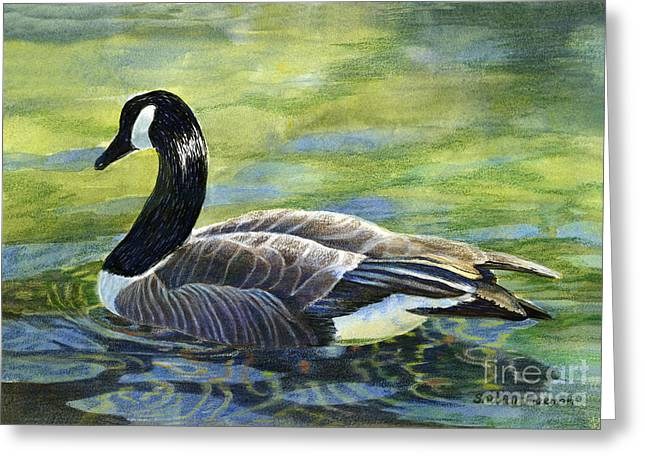 Water Fowl Greeting Cards - Canada Goose Reflections Greeting Card by Sharon Freeman