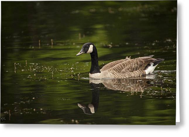 Reflection In Water Greeting Cards - Canada Goose Reflects Greeting Card by Karol  Livote