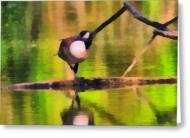 Reflection In Water Mixed Media Greeting Cards - Canada Goose Spring Reflection Greeting Card by Dan Sproul