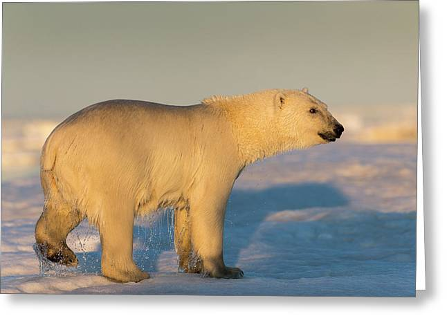 Canada, Nunavut Territory, Rear View Greeting Card by Paul Souders