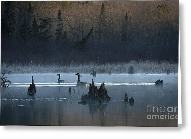 Birdseye Greeting Cards - Canada Pair Greeting Card by Roger Bailey