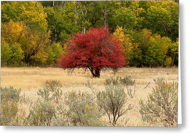 Canadian Autumn Greeting Card by Kathy Bassett