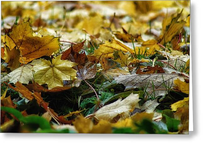 Ground Level Greeting Cards - Canadian Autumn Greeting Card by Mountain Dreams