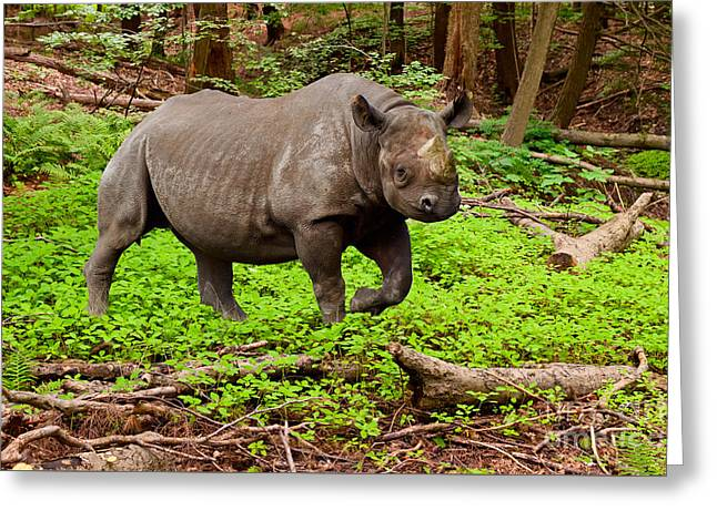 Rhinoceros Greeting Cards - Canadian boreal rhino or Rhinoceros Canadensis Greeting Card by Les Palenik