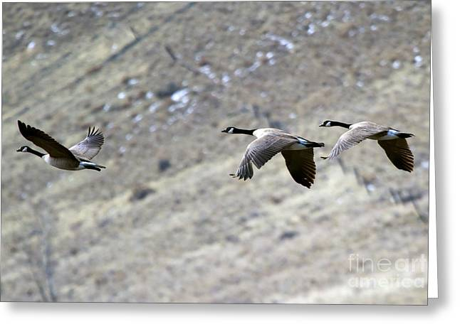 Yakima River Greeting Cards - Canadian Flight Greeting Card by Mike  Dawson