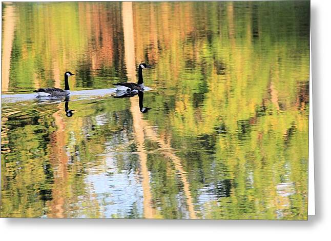 Wild Goose Greeting Cards - Canadian Geese Greeting Card by Dan Sproul