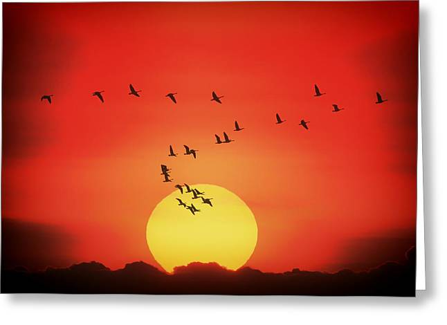 Geese Silhouette Greeting Cards - Canadian Geese Heading South at Sunset Greeting Card by Mountain Dreams