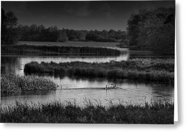 Wisconsin Landscape Greeting Cards - Canadian Geese in the Wetlands Greeting Card by Mountain Dreams