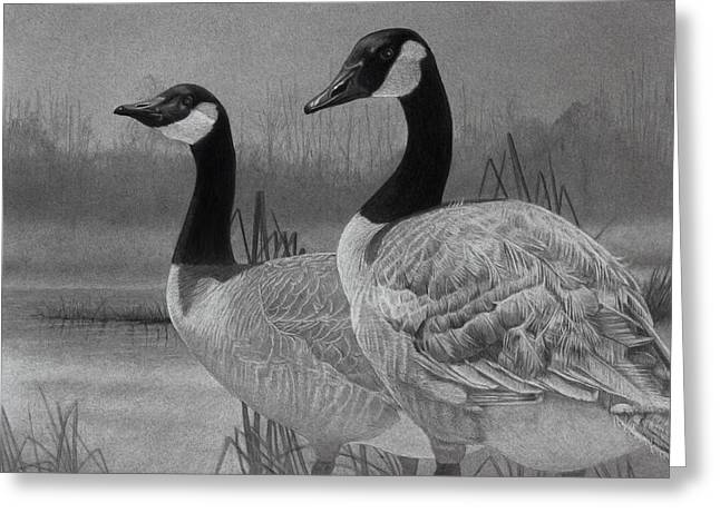 Graphite Drawing Greeting Cards - Canadian Geese Greeting Card by Tim Dangaran