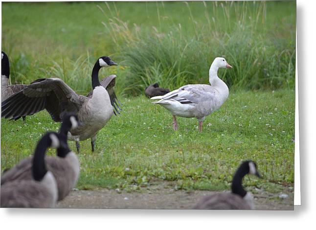 Canada goose jacket vaughan mills