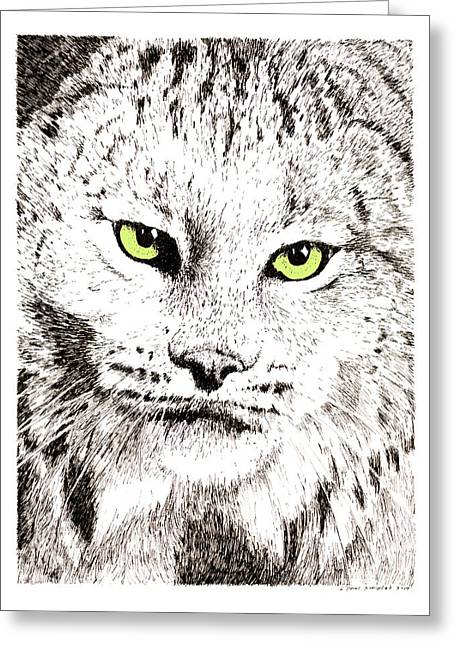 Bobcat Drawings Drawings Greeting Cards - Canadian Lynx Greeting Card by Paul Kmiotek