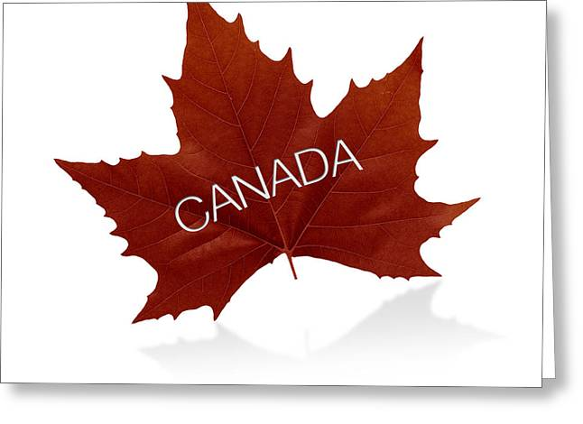 Geese Drawings Greeting Cards - Canadian Maple Leaf Greeting Card by Aged Pixel
