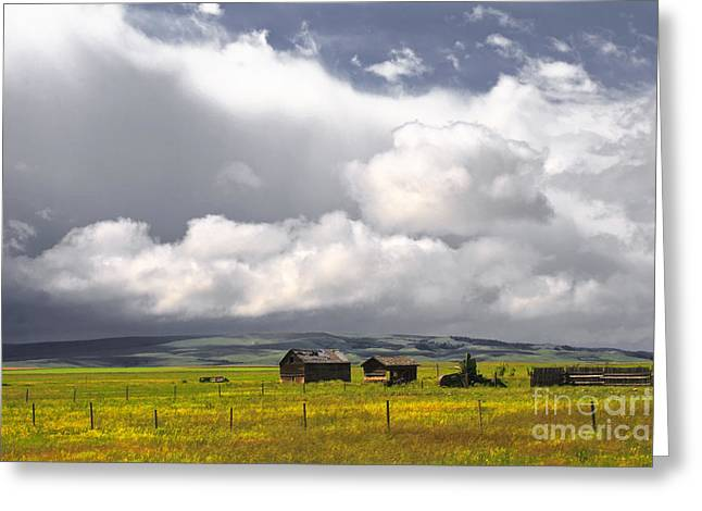Prairie Landscape Greeting Cards - Canadian Prairie Greeting Card by Charline Xia