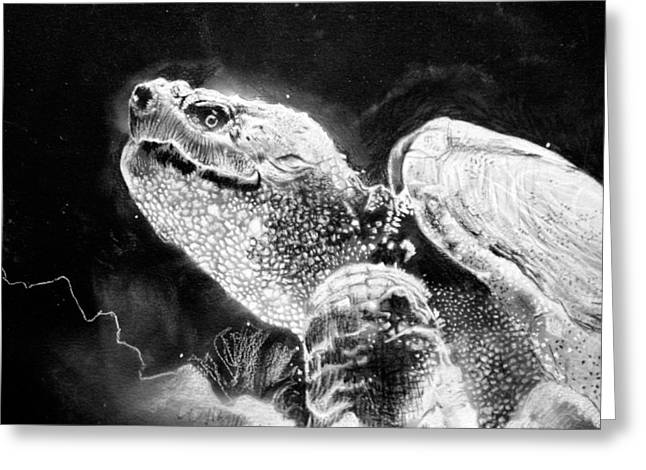 Wood Turtle Greeting Cards - Canadian Snapping Turtle Greeting Card by Sharlena Wood