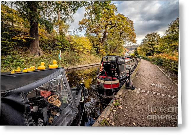 Autumnal Greeting Cards - Canal Ducks Greeting Card by Adrian Evans