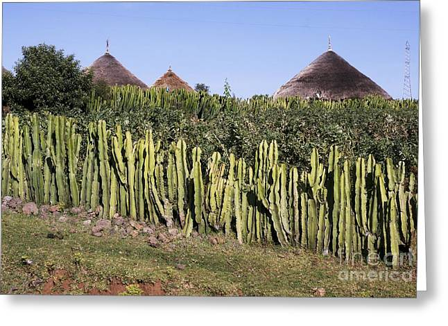 Candelabra Greeting Cards - Candelabra Hedge, Ethiopia Greeting Card by Brian Gadsby