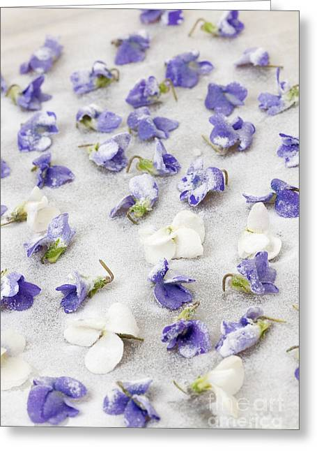 Organic Photographs Greeting Cards - Candied violets Greeting Card by Elena Elisseeva