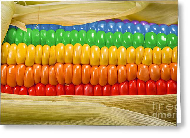 Corn Meal Greeting Cards - Candy Corn Greeting Card by Ray Warren and KittyBitty Manicured Photos