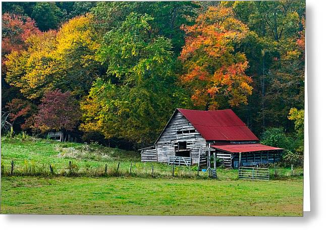 Red Maple Trees Greeting Cards - Candy Mountain Greeting Card by Debra and Dave Vanderlaan