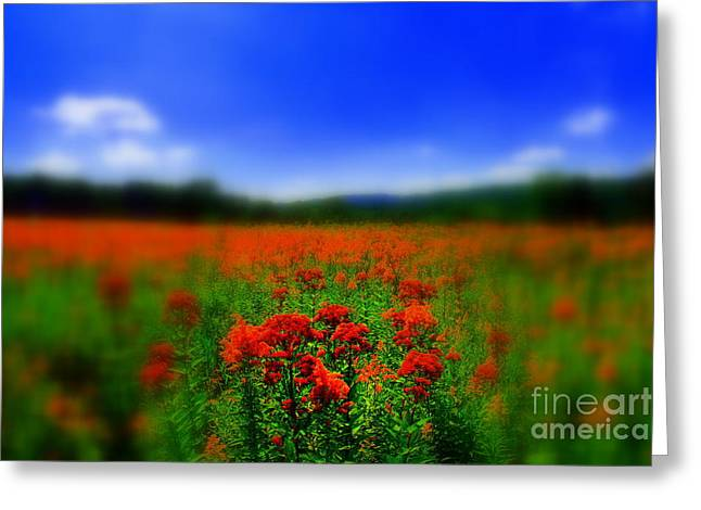 Flower Photos Greeting Cards - Candyland Greeting Card by Neal  Eslinger