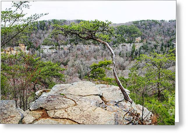 Cane Creek Greeting Cards - Cane Creek Gorge Overlook Greeting Card by Paul Mashburn