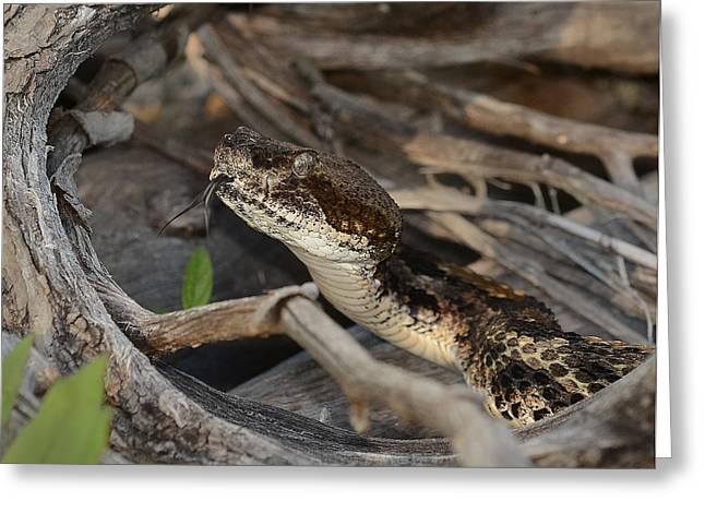 Canebrake Greeting Cards - Canebrake Greeting Card by Eric Abernethy