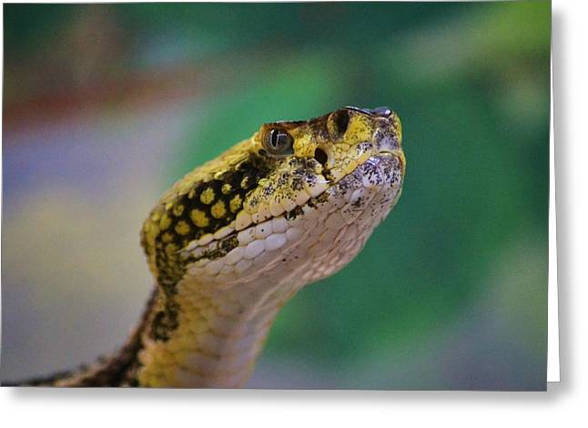 Canebrake Greeting Cards - Canebrake Portrait 4 Greeting Card by Bryan Kelley