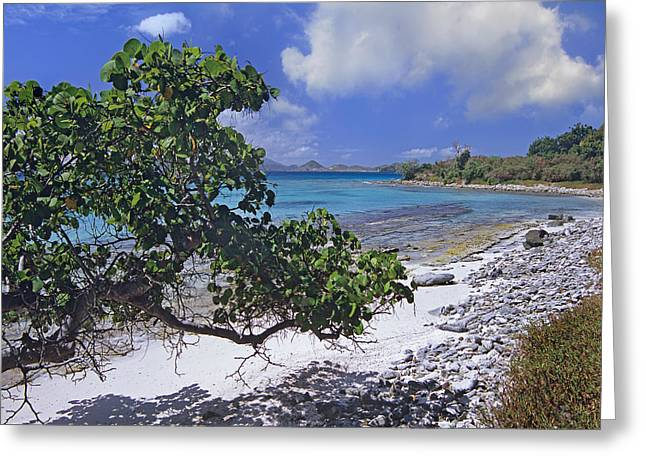 Tim Fitzharris Greeting Cards - Caneel Bay in United States Virgin Islands Greeting Card by Tim Fitzharris