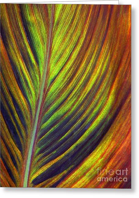 Canna Greeting Cards - Canna Leaf Greeting Card by Living Color Photography Lorraine Lynch