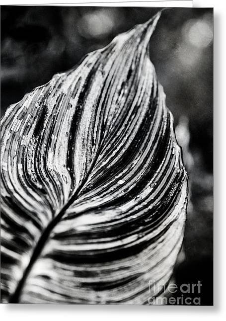 Zingiberales Greeting Cards - Canna Leaf Greeting Card by Venetta Archer