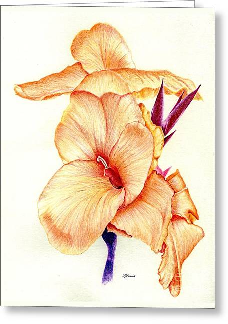 Canna Lilly Greeting Card by Pamela Cawood