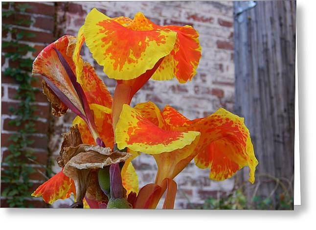 Canna Greeting Cards - Canna Lily and Background Greeting Card by Warren Thompson