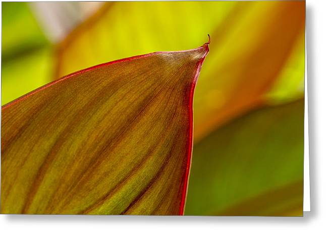 Canna Greeting Cards - Canna Lily leaf Greeting Card by Marina Kojukhova