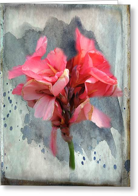 Canna Greeting Cards - Canna Lily Greeting Card by Paulette B Wright