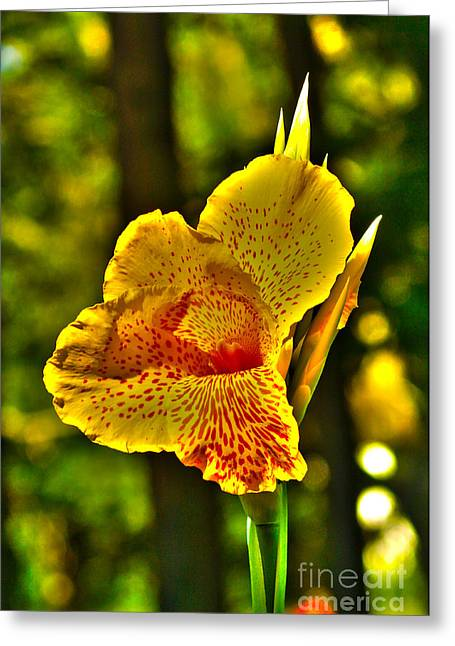Canna Greeting Cards - Canna WOW Greeting Card by Kim Pate