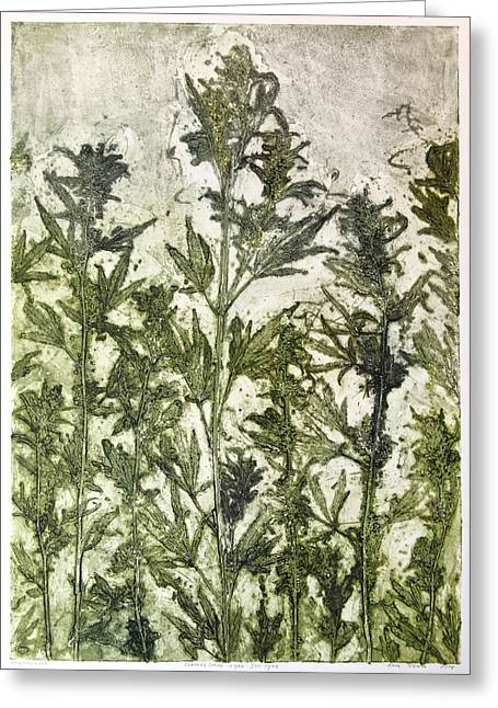 Print Making Mixed Media Greeting Cards - Cannabis Sativa Greeting Card by Anna Pilewicz